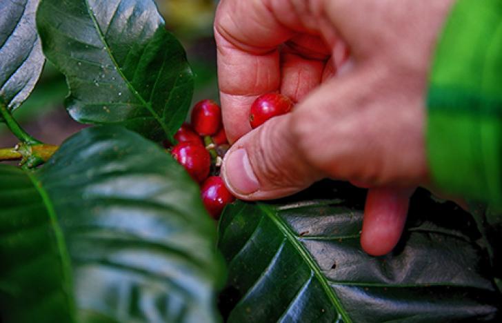 Biokaffee aus dem Waldviertel